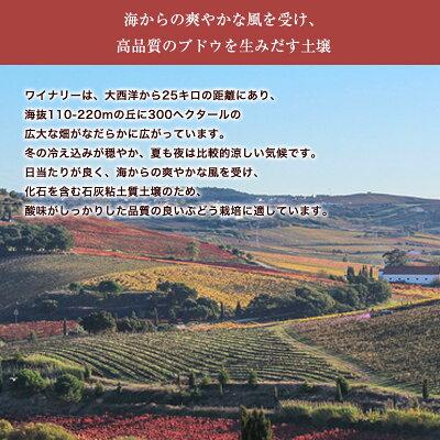 ラブラドール・ティント[2016]【赤】【リスボア】750ml 【6sou】