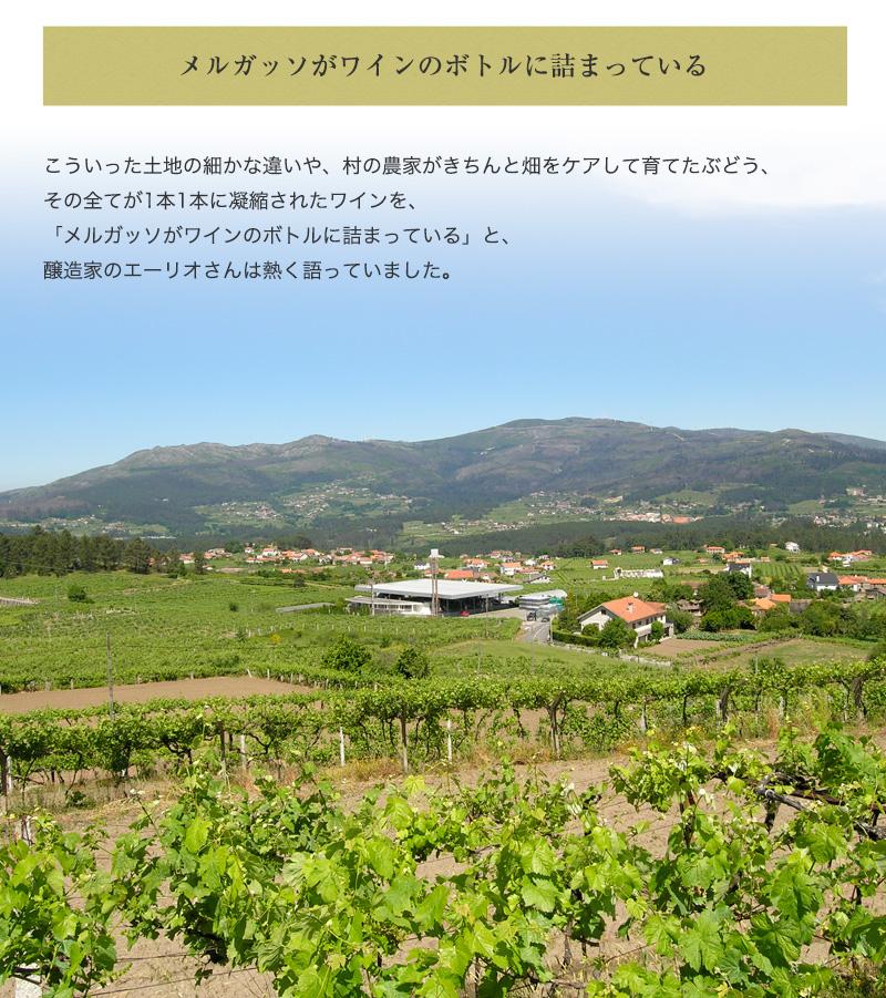 QMロウレイロ・アルヴァリーニョ[2019] 750ml 白ワイン 辛口 ヴィーニョ・ヴェルデ地方  直輸入 ポルトガルワイン 【6sou】