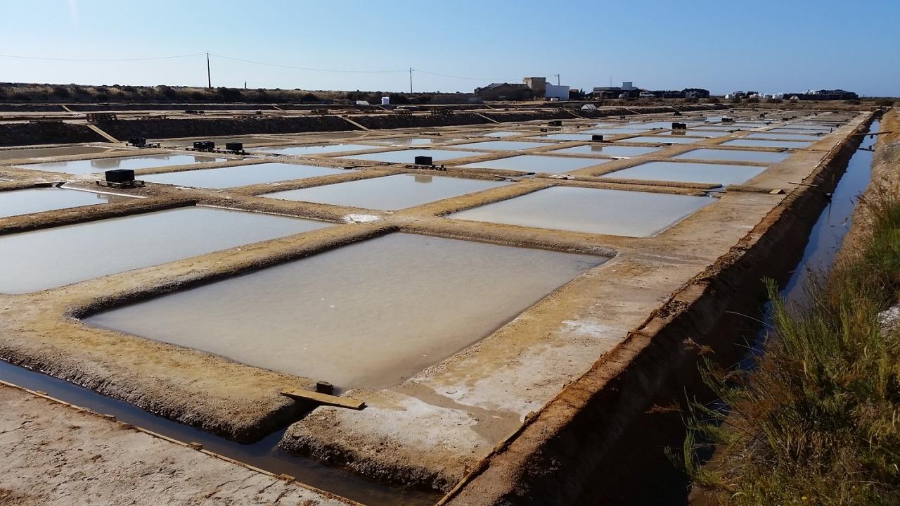 塩生産者からの収穫期の様子