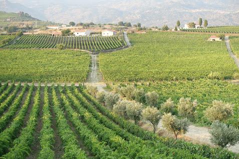 ポルトガル北部ドウロ地方からポートワイン生産者が来日します!(土曜日のみ)