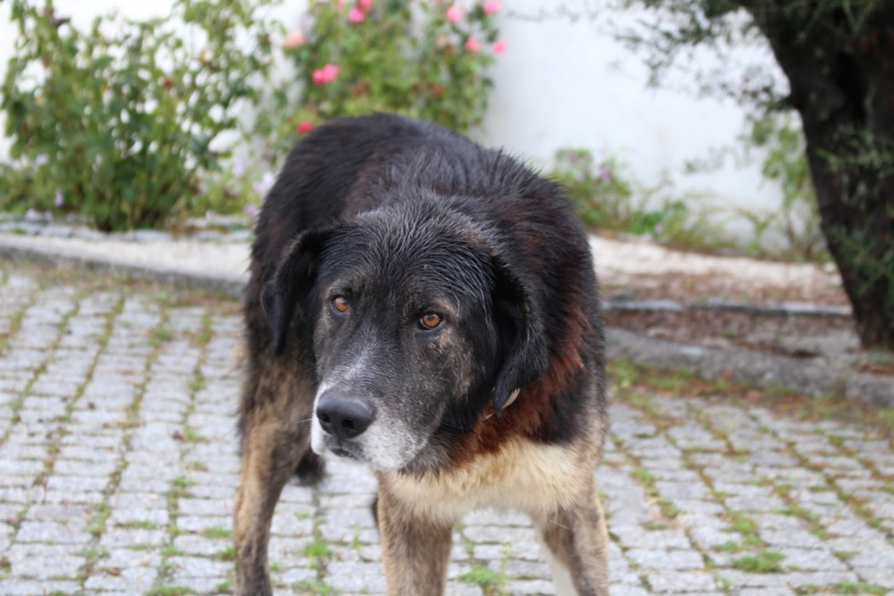 オスカー・ケヴェドの犬・ブラック
