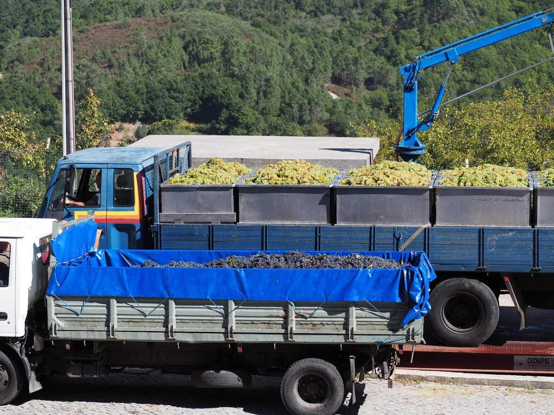 ぶどうは納品される前にトラックごと重量を測定し、荷卸後、納品されたぶどうの重量を記録します。