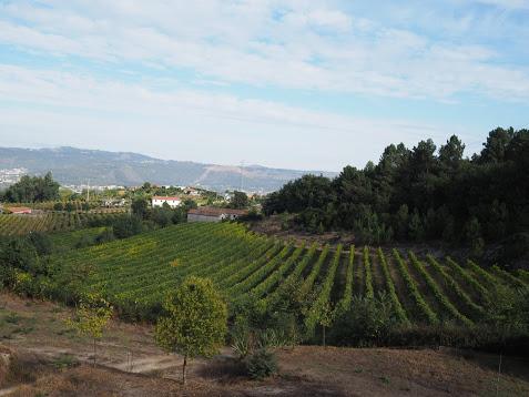 ワイナリーからの畑の眺め、空気が美味しい自然豊かな環境です