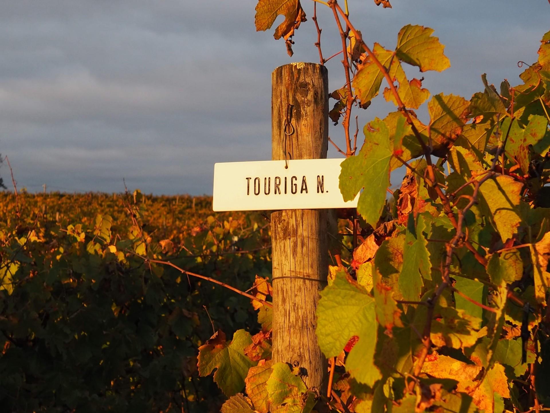 ポルトガルのぶどう畑は秋の色
