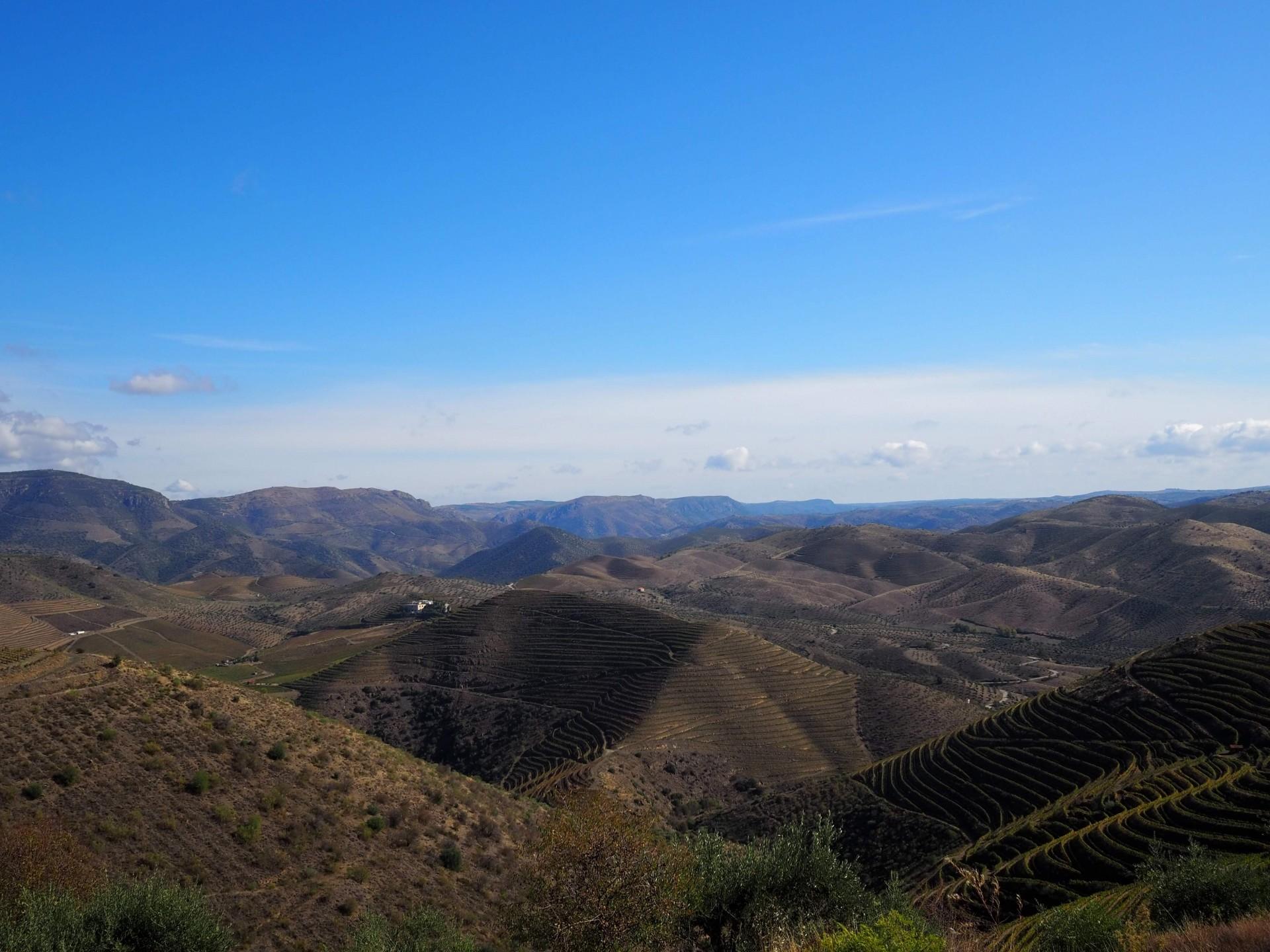 オリーブ畑とぶどう畑が広がるドウロの景色
