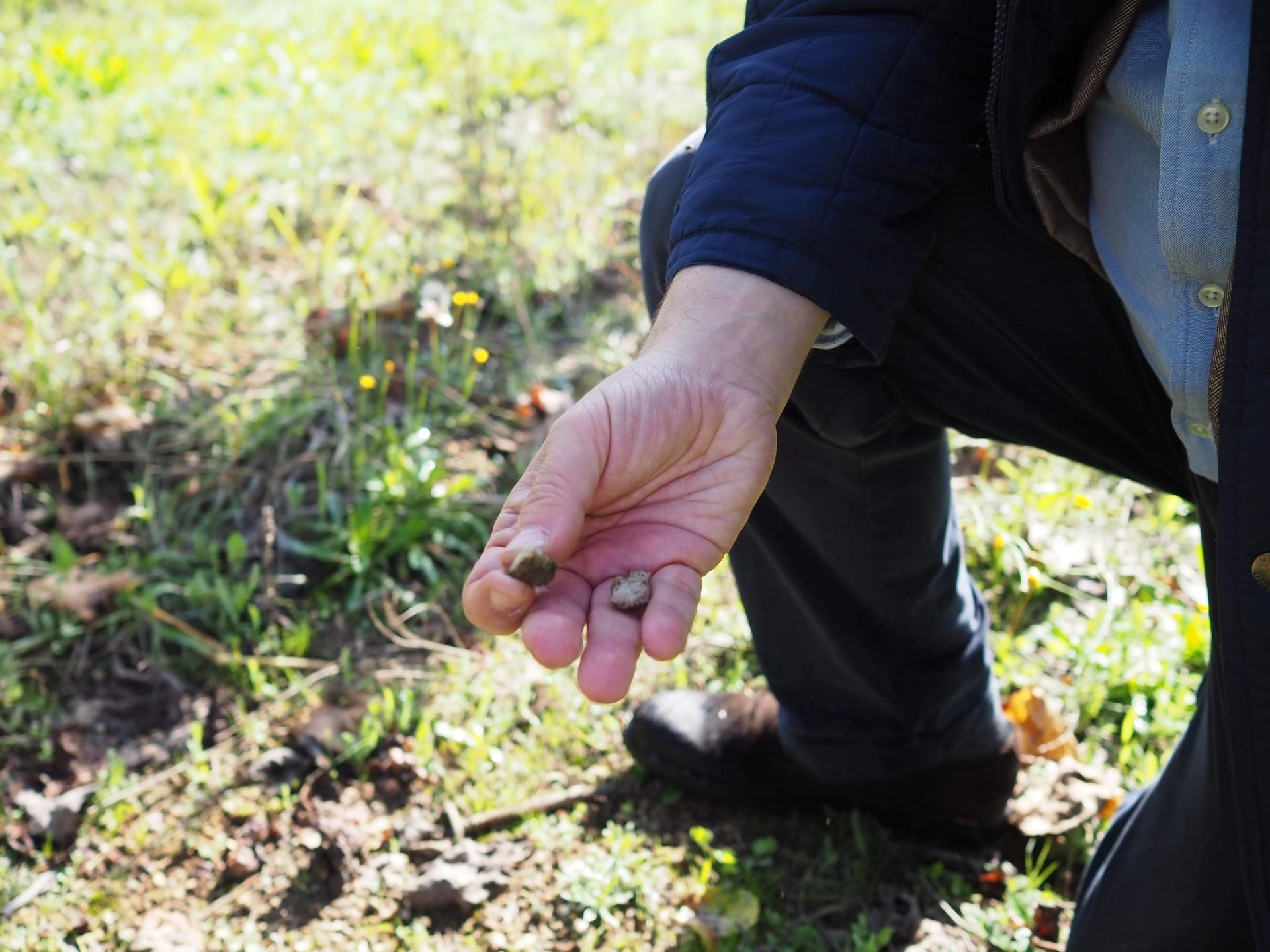 石英を含む砂質花崗岩土壌。これが品質の良いぶどうの原点であると説明してくれました。
