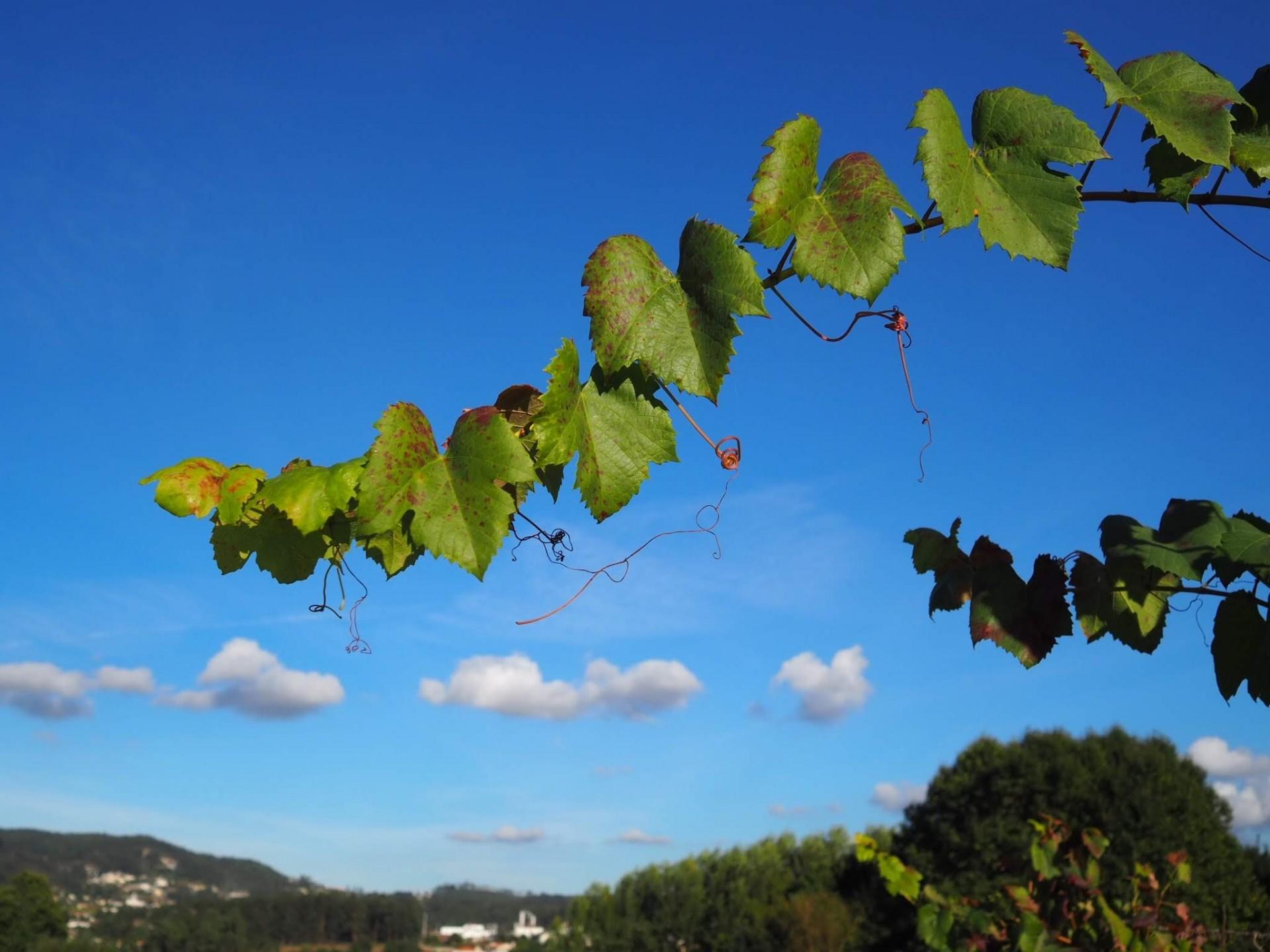 真っ青な空が美しいポルトガル!